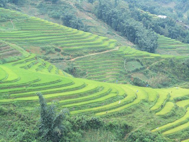 Viajando como una pluma: Los Valles y las terrazas de arroz de Sapa!