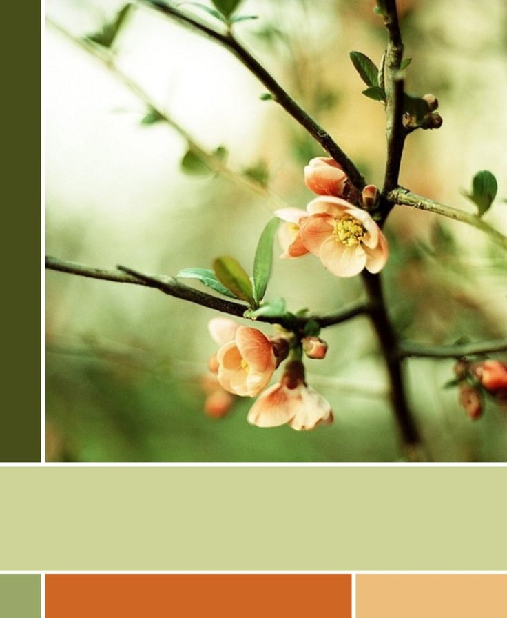 colors: Spring Blossom, Colors, Green, Art, Beautiful Flowers, Things, Color Palette, Blossoms