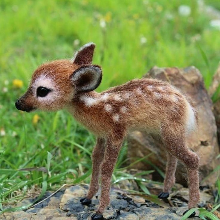 A baby deer #natures Follow Natures Impressions for more! DM for credit