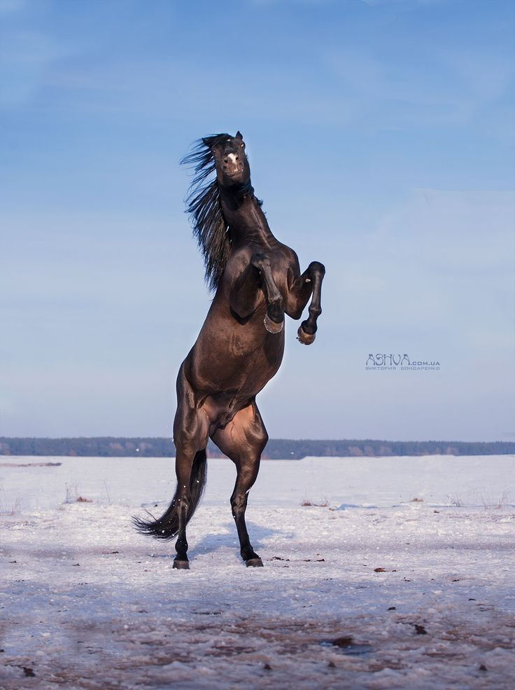 Im A Horse My Chinese Zodiac Colouring Book Volume 1