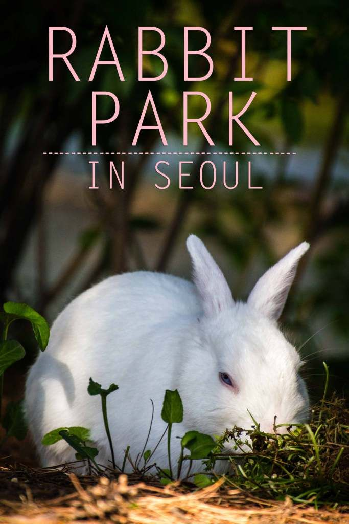There's a park filled with rabbits in Seoul's french village and it's the perfect picnic spot!