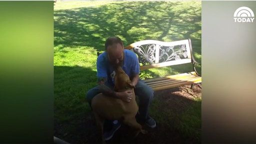 Watch Watch This Dog Go Crazy Once He Sees Owner for the First Time in Five Weeks from NBC TODAY Show. Shane lost 50 pounds and his dog Willie didn't initially recognize him. But once the dog got a sniff of his owner, he couldn't contain his excitement.