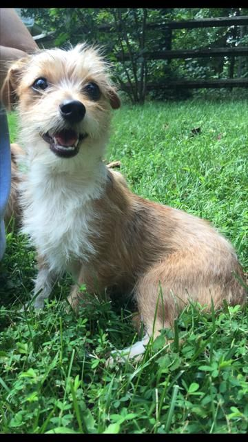 Adopt Augustus On With Images Terrier Mix Dogs Dogs Terrier Mix