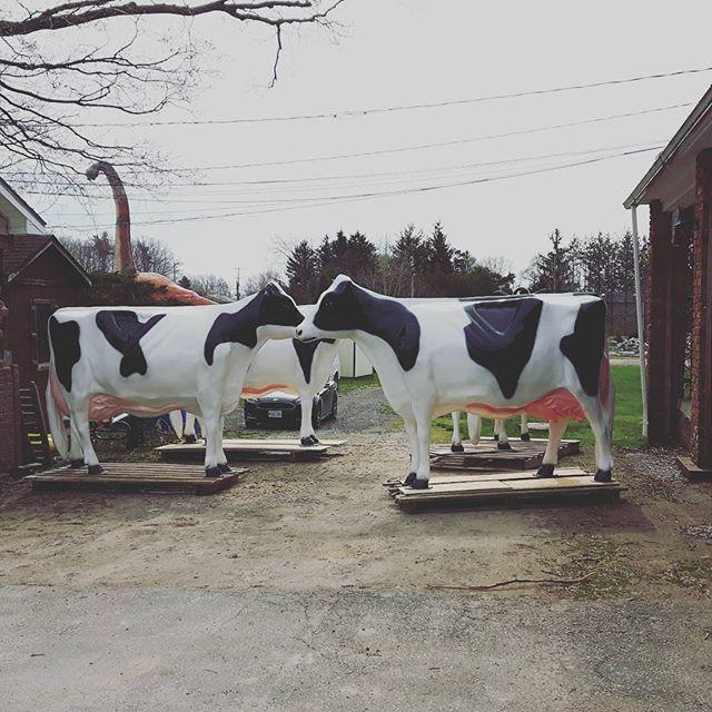 fibreglass cows at Flamborough Patio