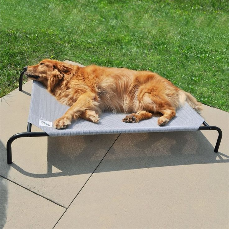 Best 25+ Elevated dog bed ideas on Pinterest | Raised dog ...