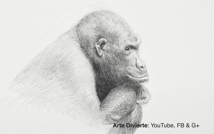 Cómo dibujar un gorila - Narrado  #arte #dibujo #Artedivierte #gorila #animales #Patreon #tutorial #LeonardoPereznieto #artistleonardo  Haz clíck aquí para ver mi libro: http://www.artistleonardo.com/#!ebooks/cwpc