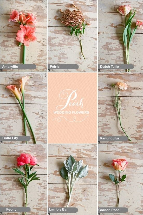 Lovely wedding flowers in peach and coral, including amaryllis, dusty miller also known as lamb's ear, lilies, peiris, peonies, tulips and ranunculus