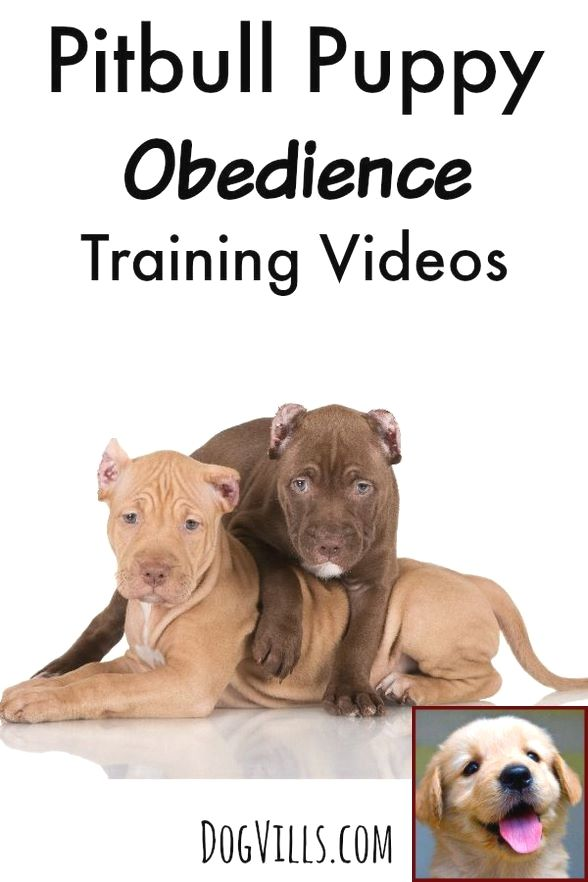 1 Have Dog Behavior Problems Learn About House Training Puppy