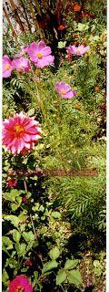 solo dibujos y fotos: fotos de flores