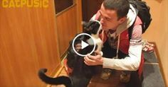 Tuxedo Kitty Greets Owner In The Most Adorable Way After Being Apart for 20 Long Days!