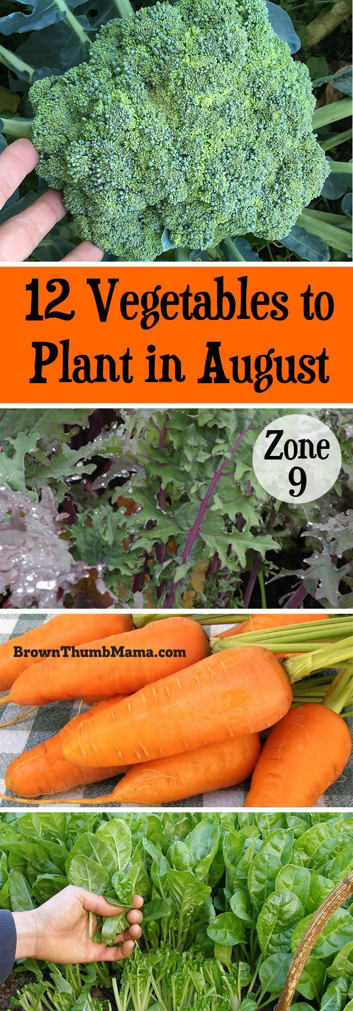12 Vegetables To Plant In August Zone 9 Vegetable 400 x 300