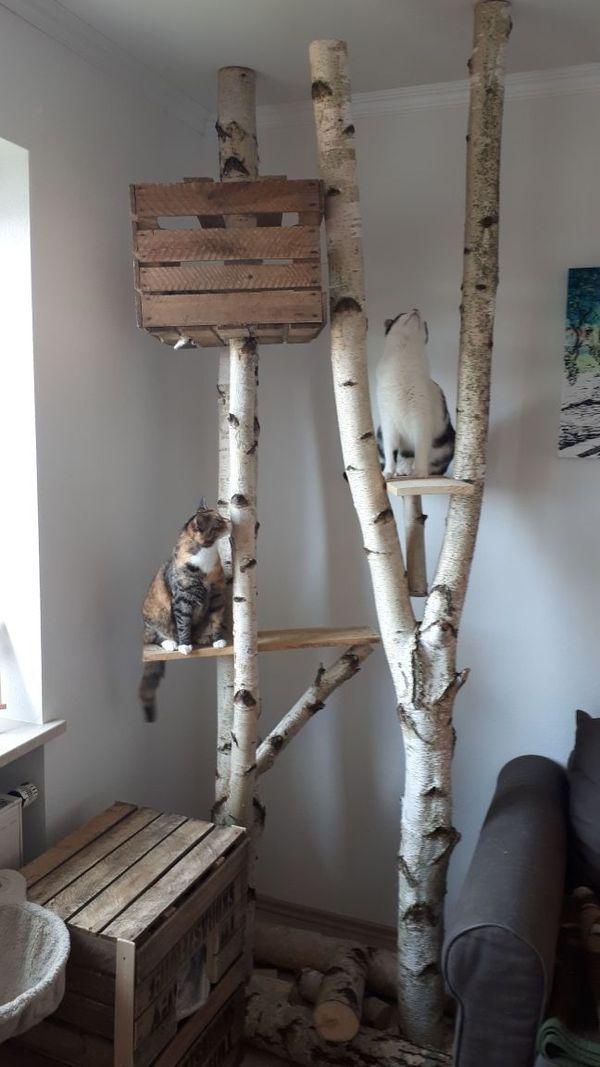 Birkenscheiben Fichtenscheiben Scratcher Kratzbaum Birkenstämme   – Kratzbaum für Katzen – DIY vs. gekauft