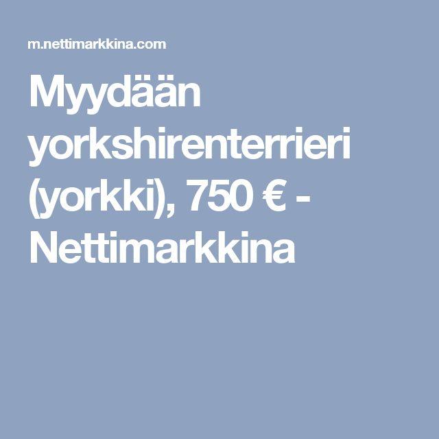 Myydään yorkshirenterrieri (yorkki), 750 € - Nettimarkkina