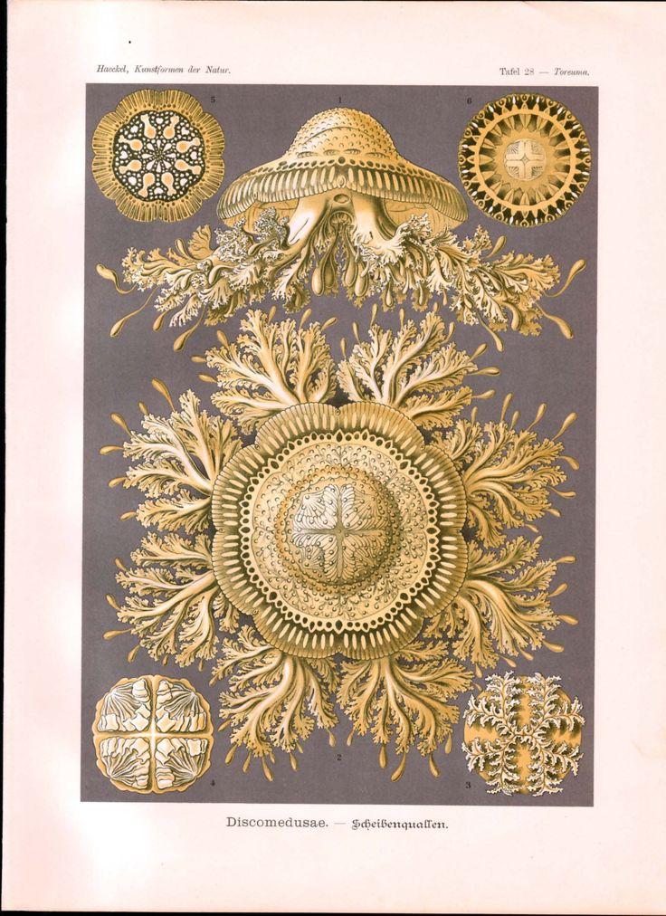 28 best Ernst Haeckel Kunstformen der Natur Art Forms in Nature Art ...