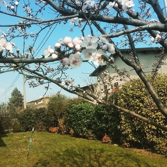 #home #my #mine #follow #me #author #ricardo #tronconi #eroticnovel #pruno #garden #white #petali #flower #power #flowerpower #nature #instanature #wife #green #siepe #grass #novellaorchidea #novella #orchidea #raccontierotici #racconti #ebook