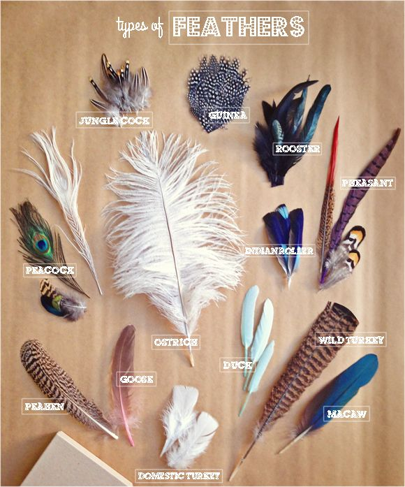 Types of craft feathers. THANK YOU!