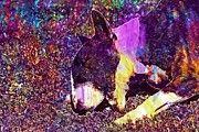 """New artwork for sale! - """" Bull Terrier Bullterrier English  by PixBreak Art """" - http://ift.tt/2gNNBRj"""