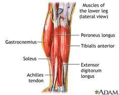 Calf Muscle Pain - Calf Strain or Pull