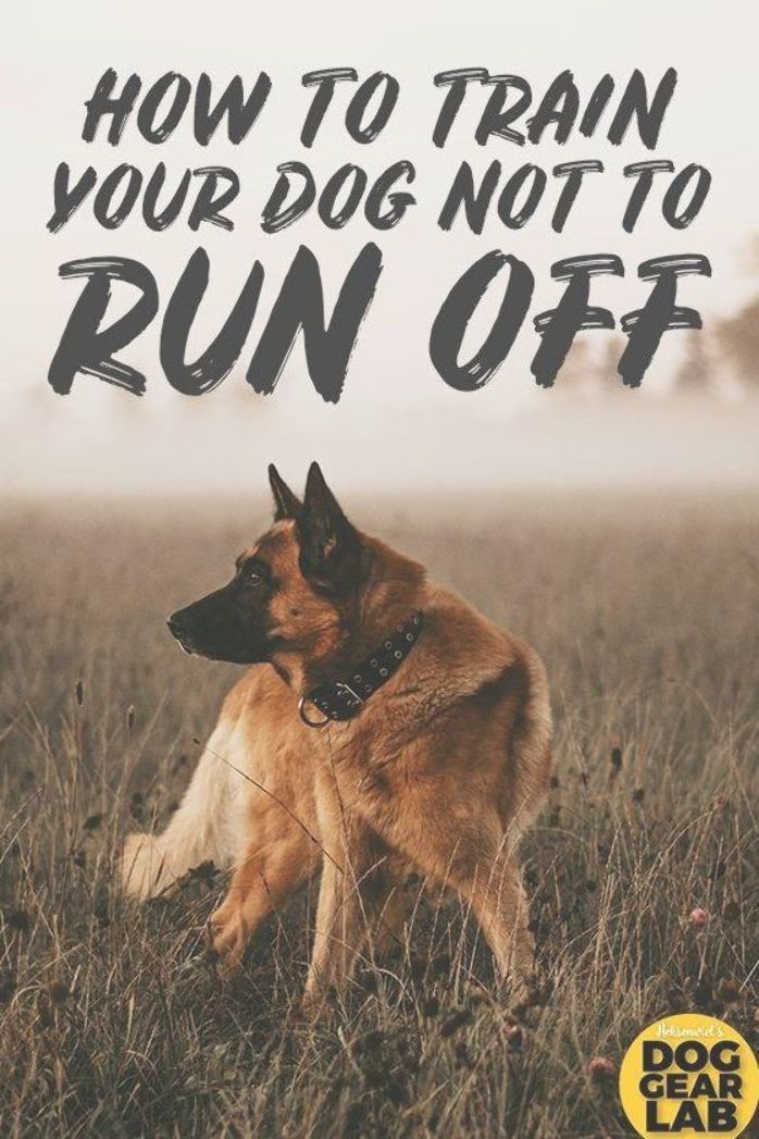 Why Does Your Dog Run Away From You And How Do You Prevent It