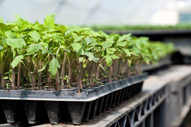 Почему нельзя убирать с огорода прошлогодние листья? | Вечные вопросы | Вопрос-Ответ | Аргументы и Факты