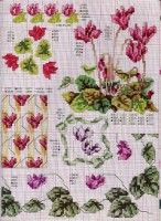 Gallery.ru / Фото #31 - Ботаника-цветы - irislena