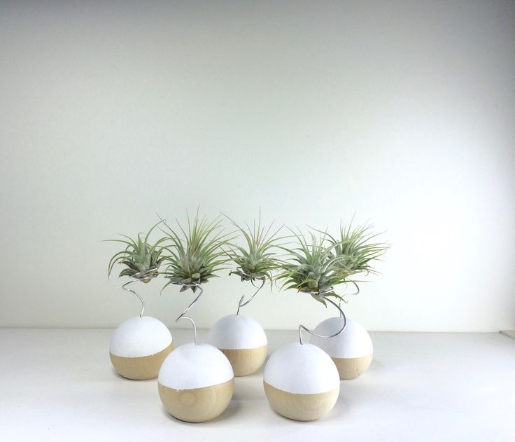 Side shot of mini air plants sitting on top of hand-painted wooden balls. #handmade #diy #airplants