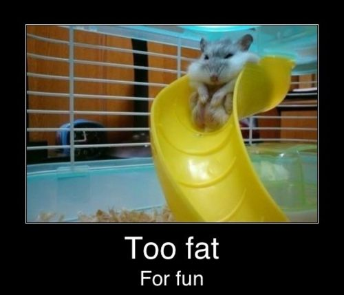 Haha!: Giggle, Funny Things, Animals, Fat, Hamsters, Funny Stuff, Humor, Funnies