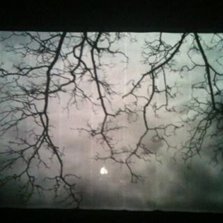 Backdrop Sade concert : sheer fabric with tree images projected onto cloth.