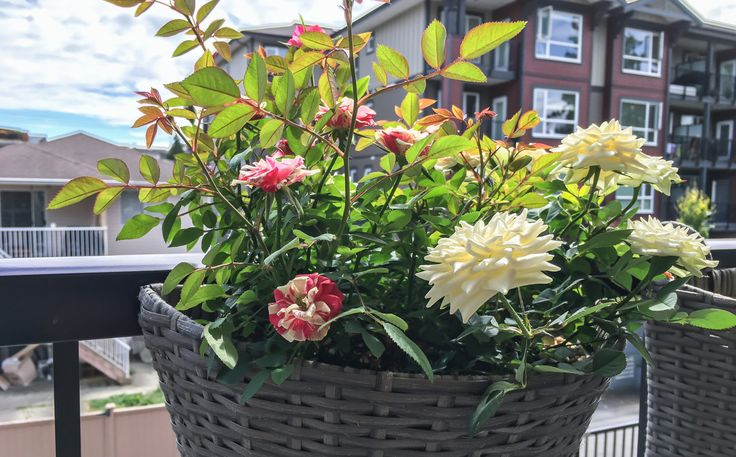 """Decorating and furnishing your balcony """"Pinterest style"""" - Garden-gardening- I have been trying to transform my balcony into a backyard. Let's say I have been quite happy with the result. I want to share my ideas..."""