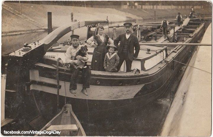 A real Belgian barge dog, c.1910.  While not a Schipperke, it bears a striking resemblance to the Gelbbacke variety of Altdeutsche Hütehunde, a possible ancestor to the Schipperke.