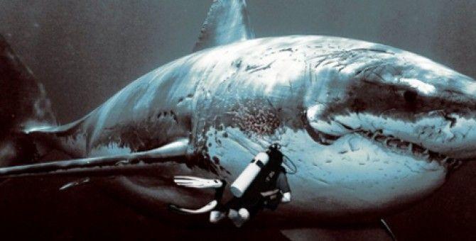 Squalo Megalodonte - Shark Megalodon   Da visitare   Pinterest   Megalodon, Shark and Animal