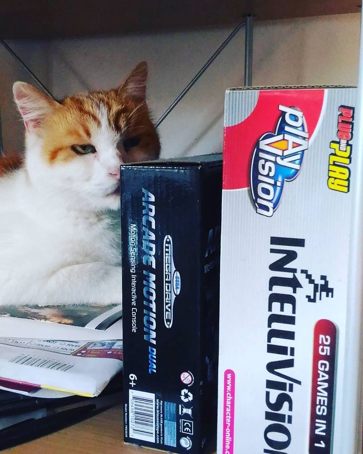 On instagram by malidetto #intellivision #microhobbit (o) http://ift.tt/1TIdqsQ #sega #genesis #megadrive #cat