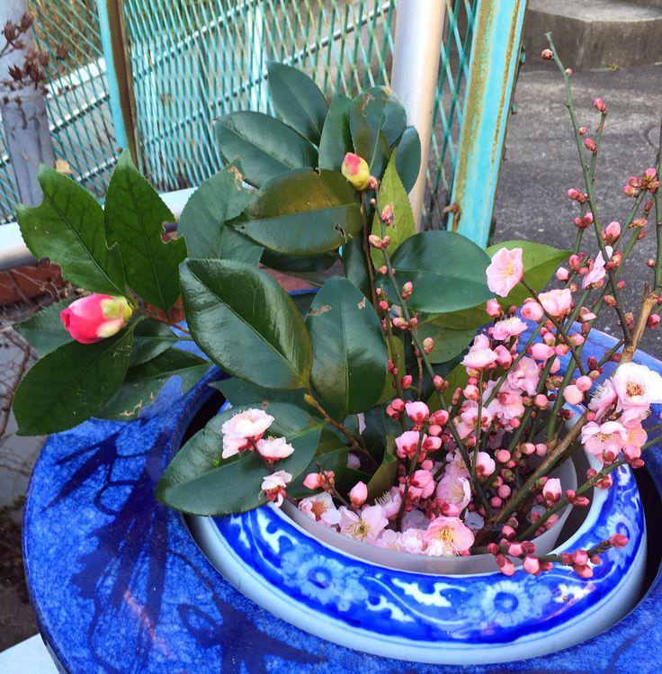 庭の花々玄関に置いています、どうぞお持ち下さい(^-^)