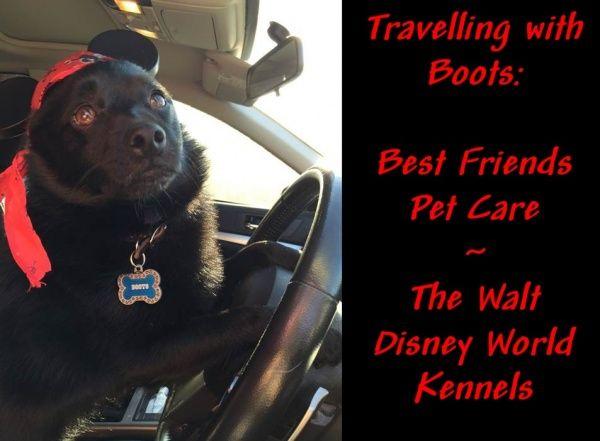 13 best Pet Care - Best Friends Resort at Disney❤ images on ...