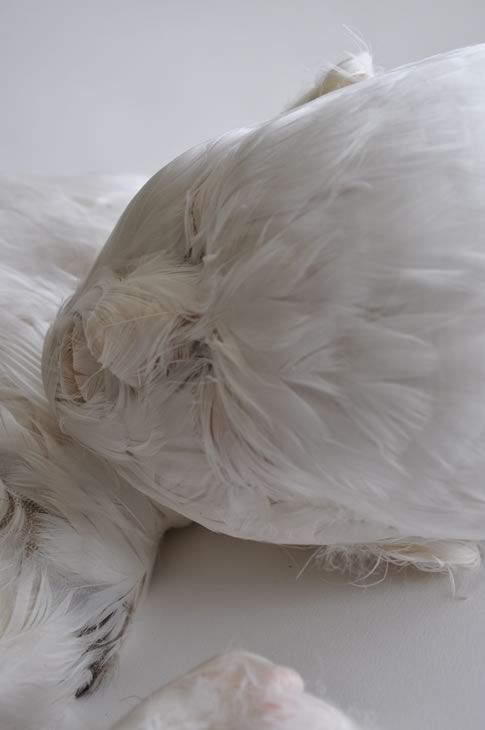 Skins Feathered child 4  http://www.lucyglendinning.com/index.html