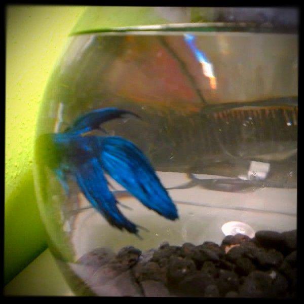 mi pez Pablo ;)