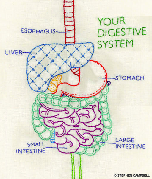 how to clean out your digestive system