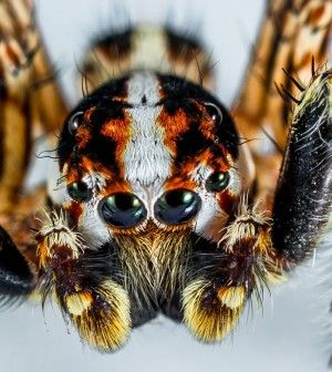 !       ....  5    . http://www.thegoodsurvivalist.com/know-your-spiders-most-common-spiders-found-in-the-u-s-avoid-these-5-spiders-at-all-cost/