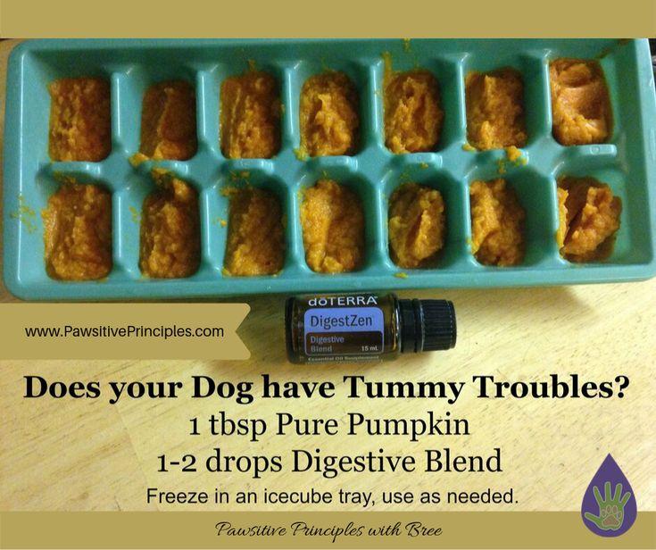 Dog tummy troubles essential oils dogs dog upset