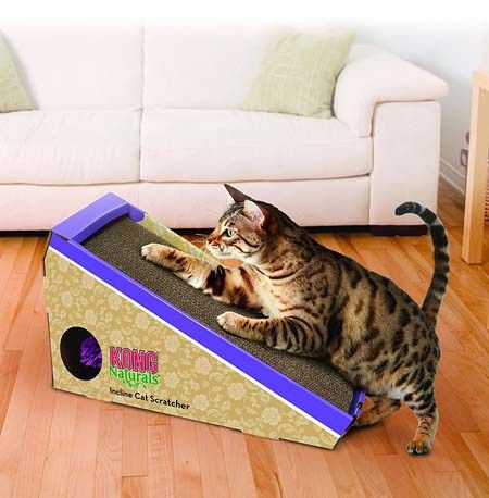 12 Wonderful Gifts for Your Cat Under $10
