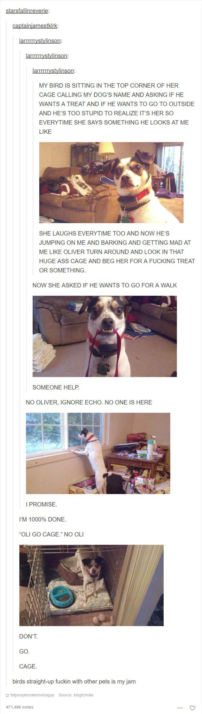 24 Dog Posts on Tumblr That Are Impossible Not to Laugh At | BlazePress
