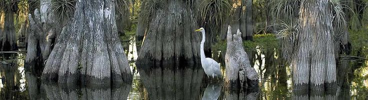 Everglades National Park, Florida  Check out Website for Florida National Parks  Gulf Islands, DeSoto, Big Cypress, Everglades, Dry Tortugas, Biscayne, Canaveral, Timicuan.