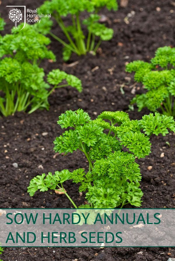 Royal Horticultural Society (RHS) - Sow hardy annuals and herb seeds
