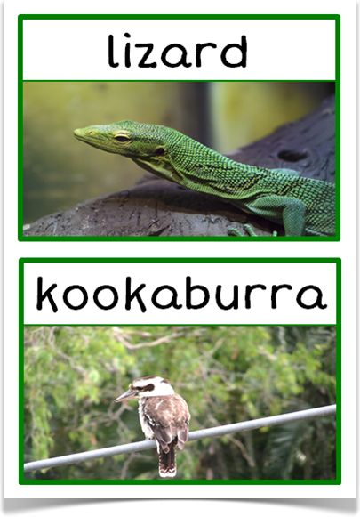 Australian Animals Photo Set - Treetop Displays - EYFS, KS1, KS2 classroom display and primary teaching aid resource