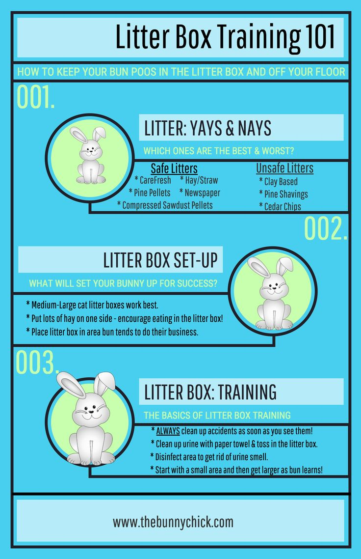 Litter Box Training for Rabbits 101!