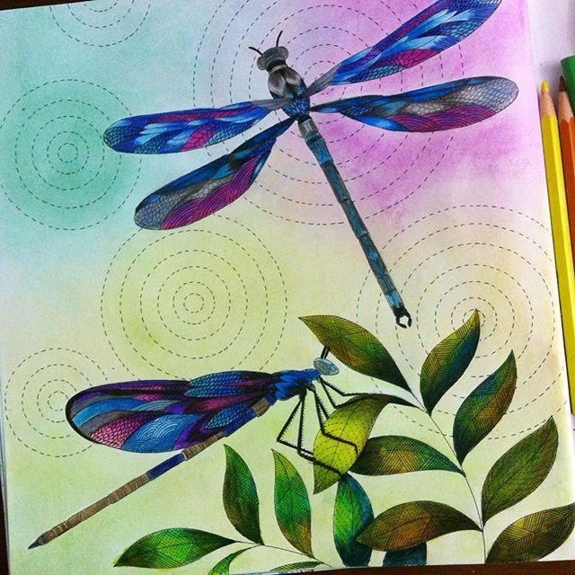 283 Best Livro De Colorir Reino Animal Images On Pinterest