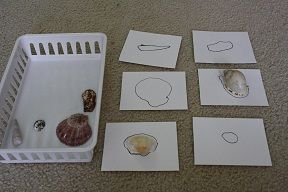 Shell matching- have shells pre-traced before giving to students. Then put the shells in a basket all mixed up next to the outlines of the shells. Students must match the shell to it's outlined shape.