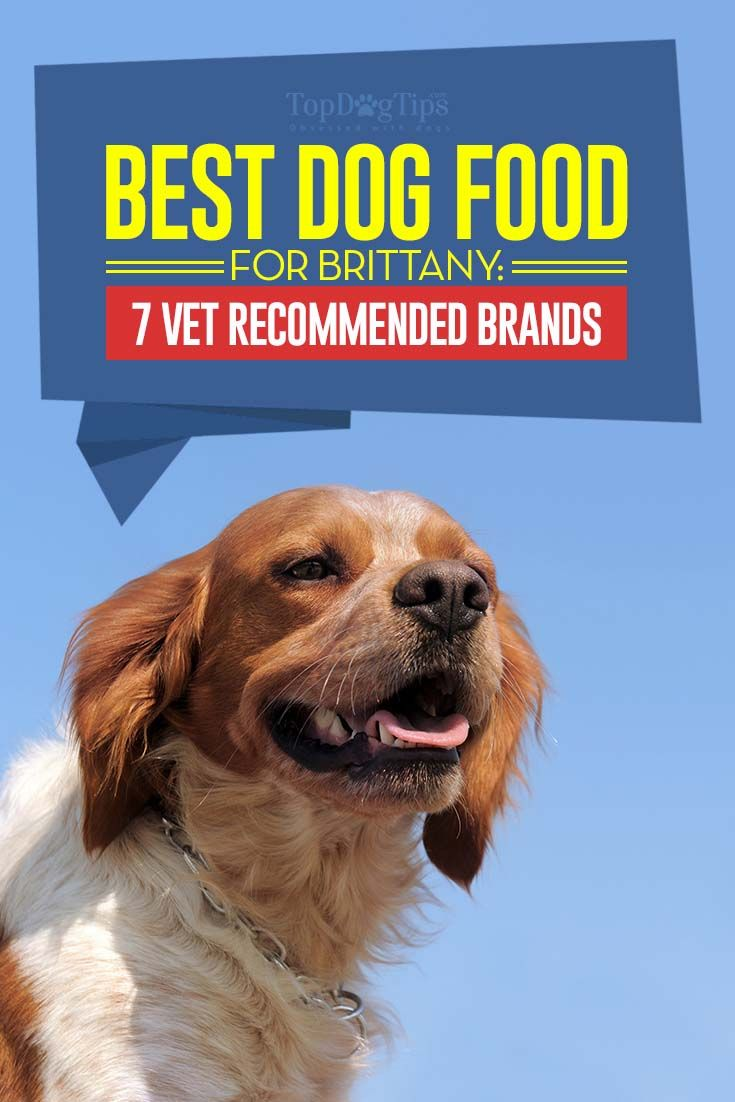7 Vet Recommended Dog Foods For Brittanys Best Dog Food Brands