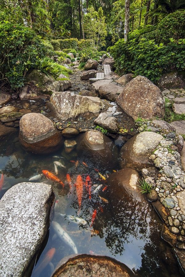 17 best images about garden on pinterest gardens stone for Koi pond garden
