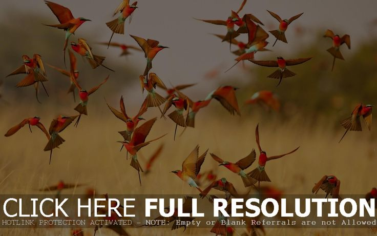 d and HD Birds Flying Angry picture wallpapers free download  HD 1920×1200 Birds Pictures Wallpapers (44 Wallpapers) | Adorable Wallpapers